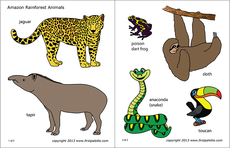 Tropical rainforest jaguar clipart png library Amazon Jungle or Rainforest Animals | Free Printable ... png library