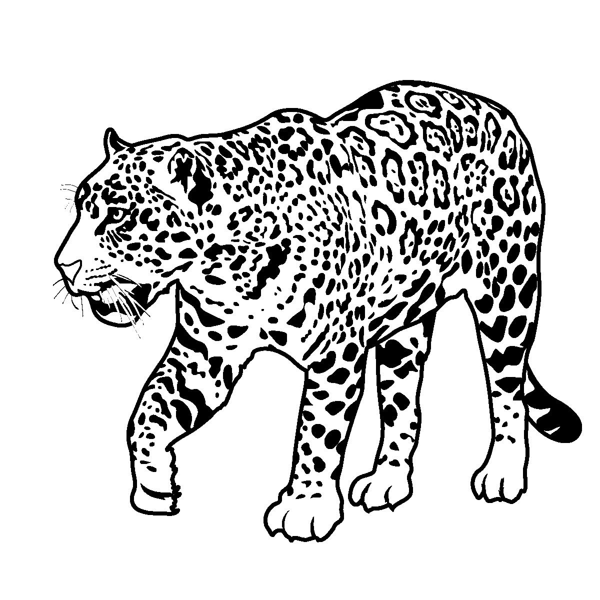 Tropical rainforest jaguar clipart freeuse library African Animals Coloring Pages | Rain Forest Theme Unit ... freeuse library