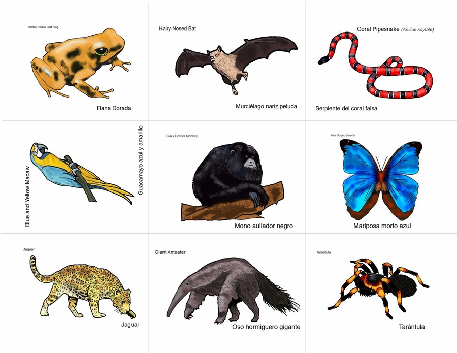 Tropical rainforest jaguar clipart picture library download Download rainforest animals to print clipart Tropical ... picture library download