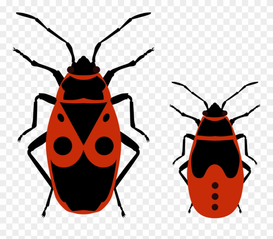 Beetle European Firebug True Bugs Drawing Nymph - Fire Bug ... clipart royalty free library