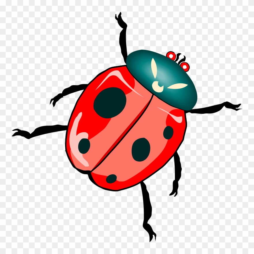 Ladybird Beetle Download True Bugs Drawing - Clip Art ... image royalty free download