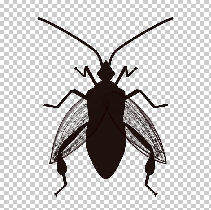 Insect Cockroach Software Bug True Bugs Pest PNG, Clipart ... picture free stock