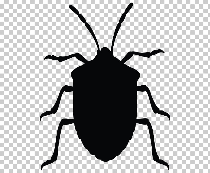 Insect Brown marmorated stink bug True bugs graphics ... jpg transparent