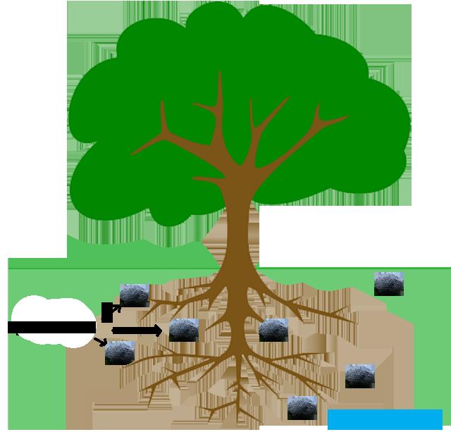 Trufamania-FAQ truffles-Tuber melanosporum image free