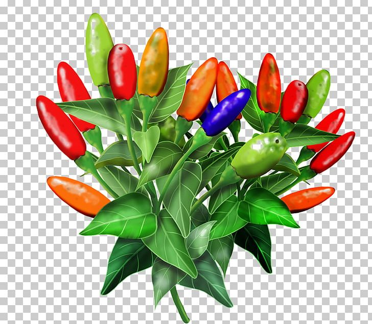 Tulip clipart birds eye view picture Birds Eye Chili Cayenne Pepper Tabasco Pepper Facing Heaven ... picture