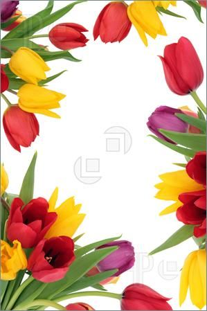 Tulip flower border design clipart jpg Purple tulip border with a row of fresh cut spring flowers ... jpg