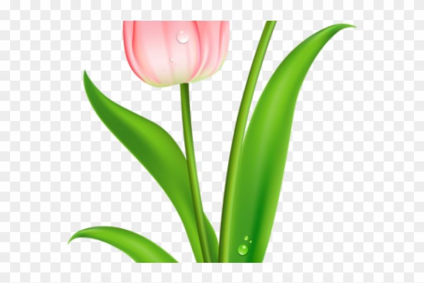 Tulip flower border design clipart svg library library Rose Tattoo Clipart Flower Border - Sprenger\'s Tulip, HD Png ... svg library library