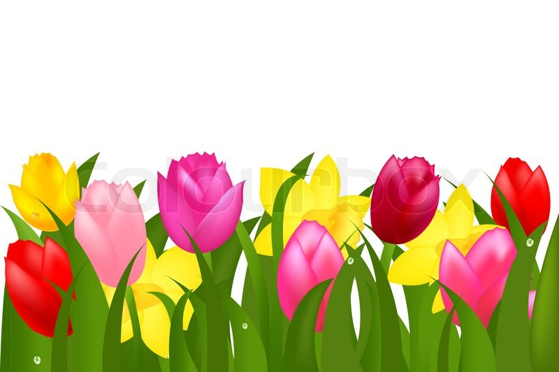 Tulip Border Clipart | Free download best Tulip Border ... png free stock