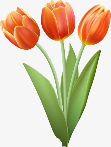 Tulip clipart 1 » Clipart Portal graphic transparent download