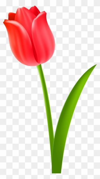 Free PNG Red Tulip Clipart Clip Art Download - PinClipart jpg transparent library