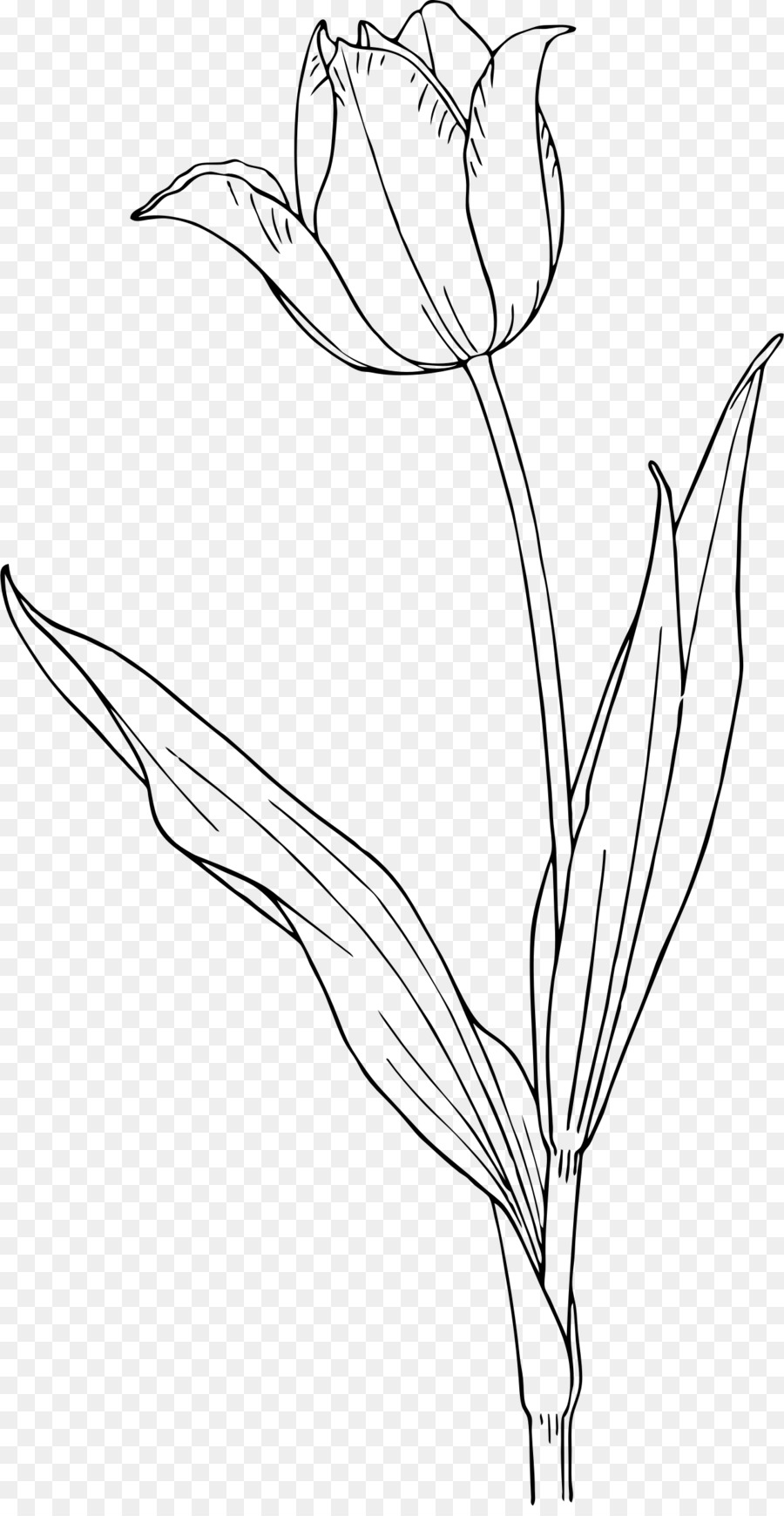 Tulip stem clipart black and wite picture royalty free download Black And White Flower clipart - Tulip, Flower, Leaf ... picture royalty free download