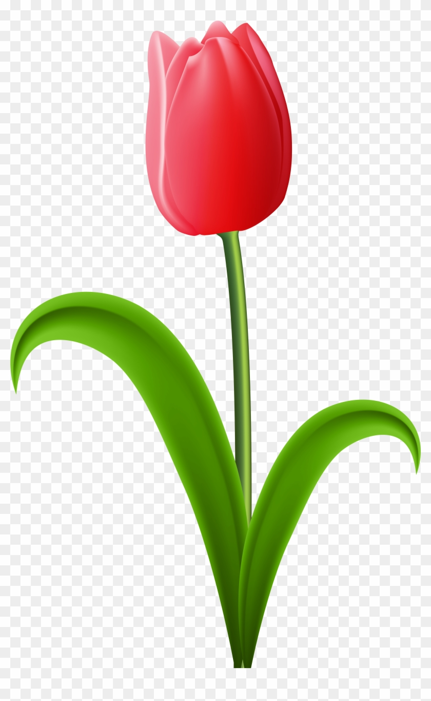 Tulips clipart transparent background free vector freeuse download Red Tulip Transparent Png Clip Art Image - Tulip Clipart ... vector freeuse download
