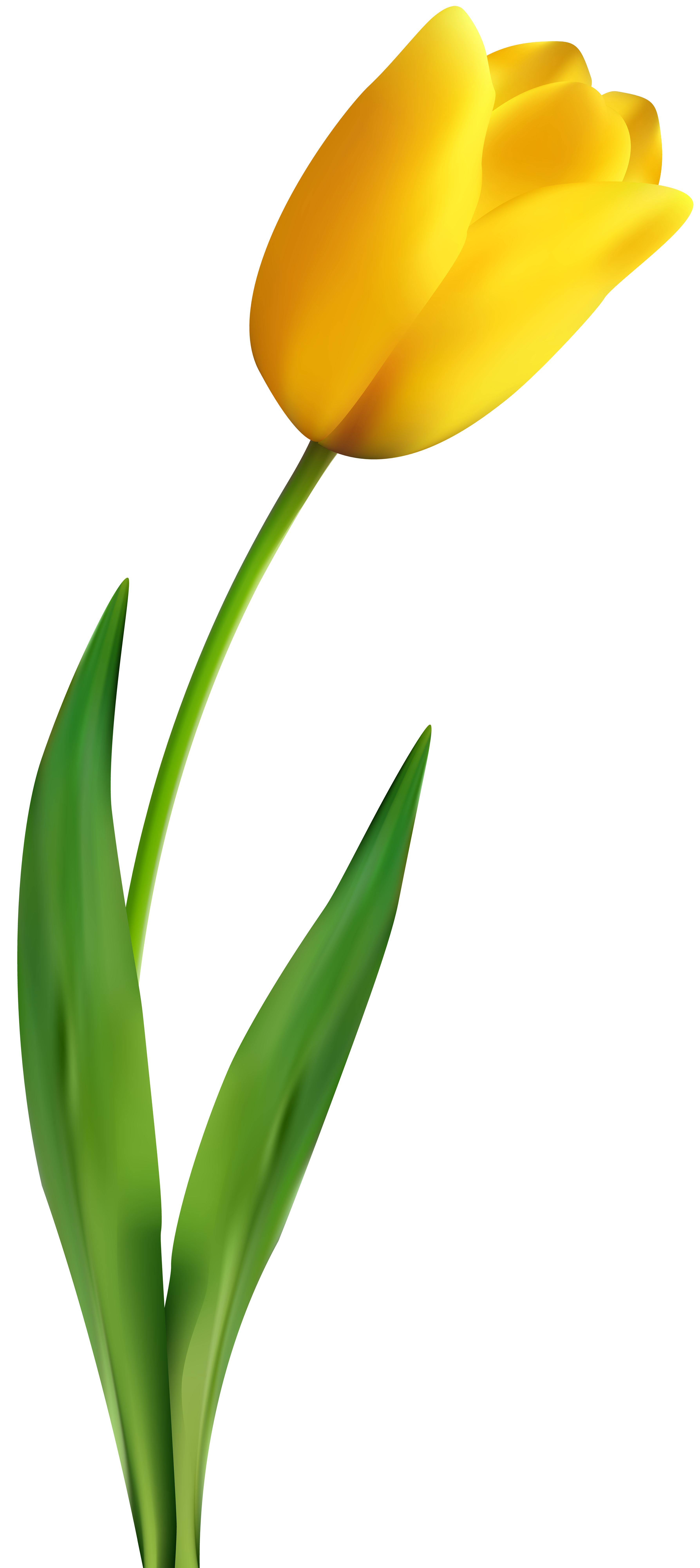 Tulips clipart transparent background free clip art library library Tulip Flower Yellow Clip art - tulip material png download ... clip art library library