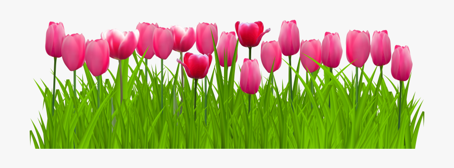 Tulips clipart transparent background free clip art royalty free library Tulip Flower Free Png Transparent Images Free Download ... clip art royalty free library