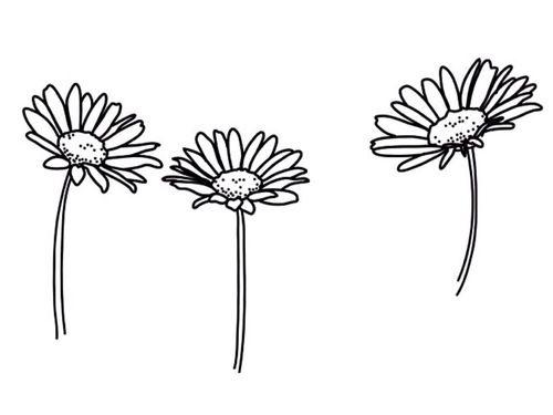 basic, black and white, flowers, pretty, transparent, tumblr ... banner black and white