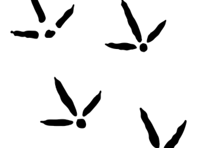 Turkey track clipart png vector black and white library Turkey Tracks Clipart 13 - 315 X 416 | carwad.net vector black and white library