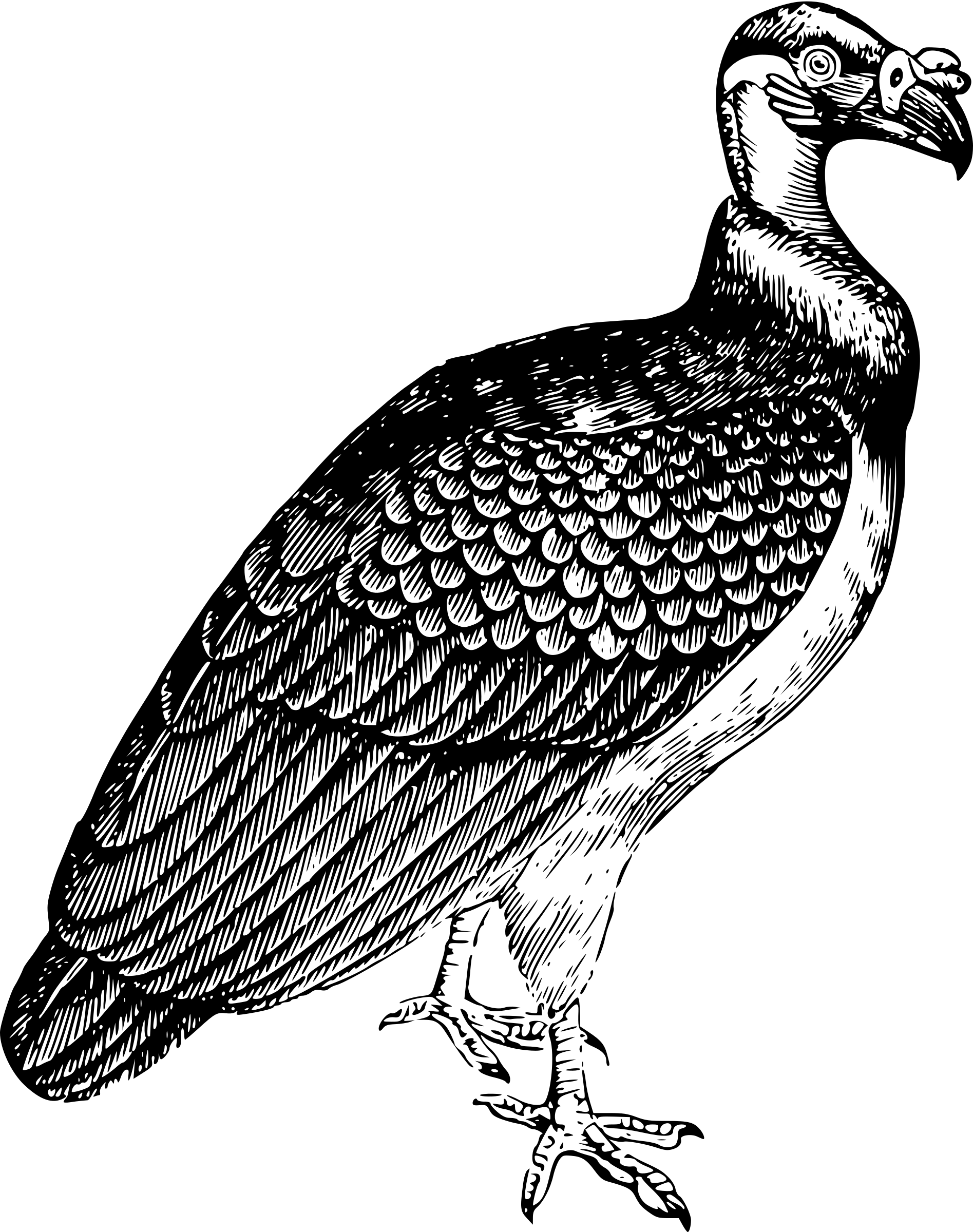 Turkey vulture clipart black and white png royalty free stock Vultures transparent PNG images - StickPNG png royalty free stock