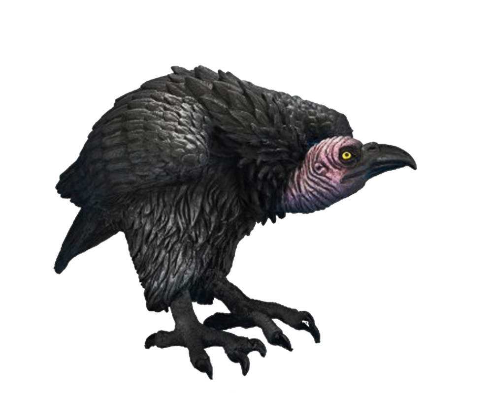 Turkey vulture clipart black and white banner freeuse Vulcher PNG Transparent Vulcher.PNG Images.   PlusPNG banner freeuse
