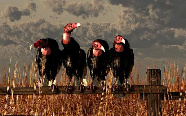 Turkey vulture clipart perched picture library library Vulture Quartet Four turkey #vultures, a contended band of ... picture library library