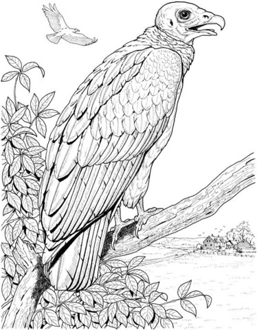 Turkey vulture clipart perched svg freeuse library Perched Turkey Vulture coloring page | Free Printable ... svg freeuse library