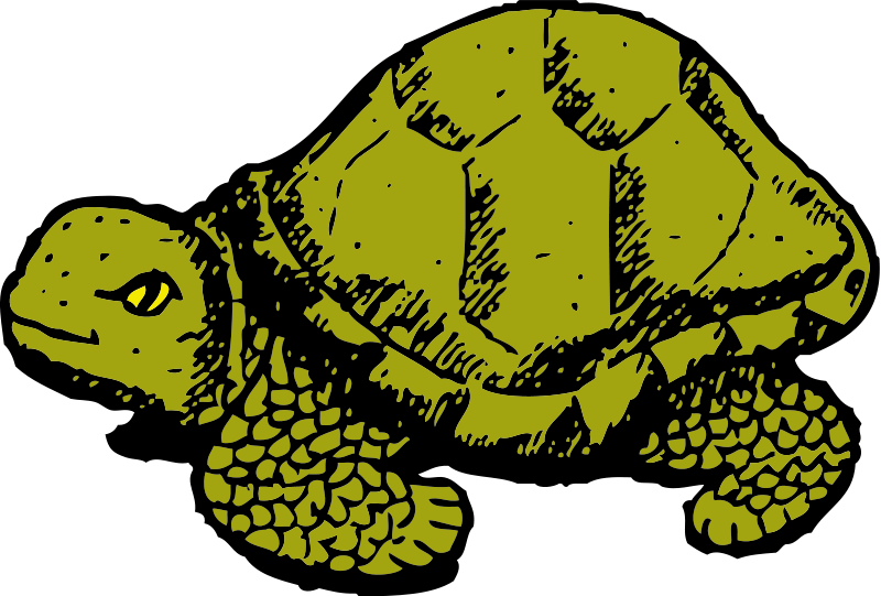 Turtle cat clipart graphic free download Turtle Animal Clipart Pictures Royalty Free | Clipart Pictures Org graphic free download