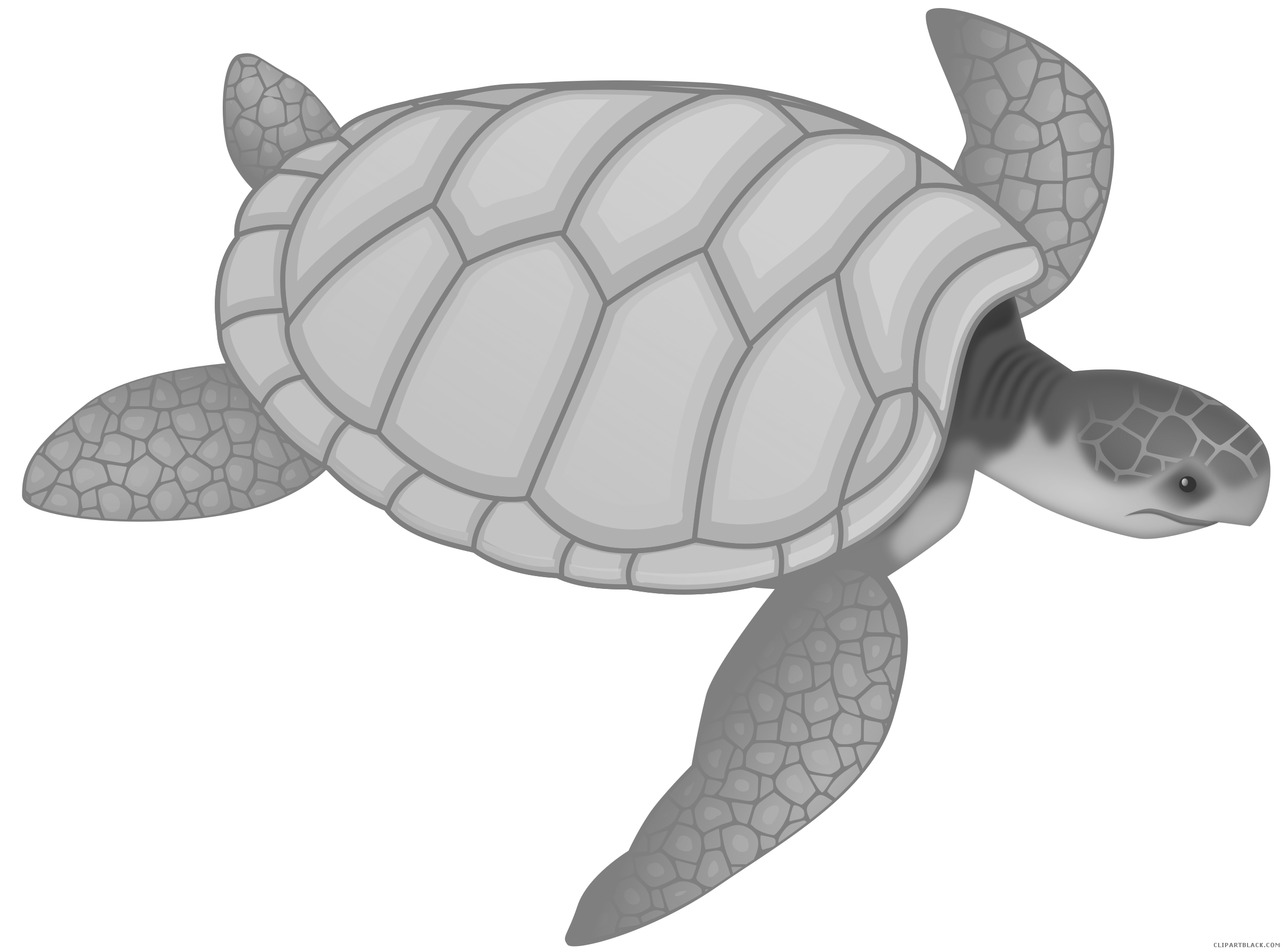 Turtle cat clipart png freeuse library Sea Turtle Clipart - ClipartBlack.com png freeuse library