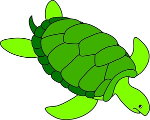 Turtle clipart jpeg image freeuse Turtle Clipart - Clipart Kid image freeuse