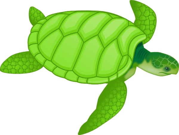 Turtle clipart svg graphic royalty free library Green Sea Turtle clip art Free vector in Open office drawing svg ... graphic royalty free library