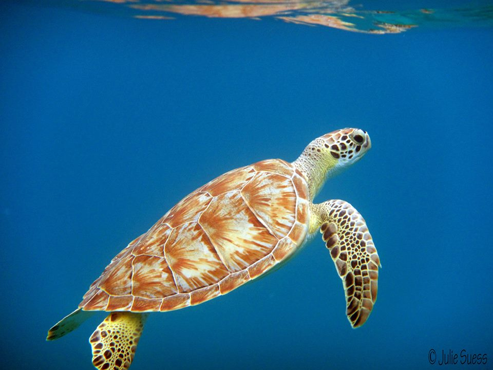 Turtle crawl faster motivation clipart freeuse stock Get Involved – Page 2 – Sea Turtle Conservancy freeuse stock