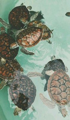 Turtle crawl faster motivation clipart royalty free download 13 Best turtles images in 2018   Sea turtles, Tortoises, Sea ... royalty free download