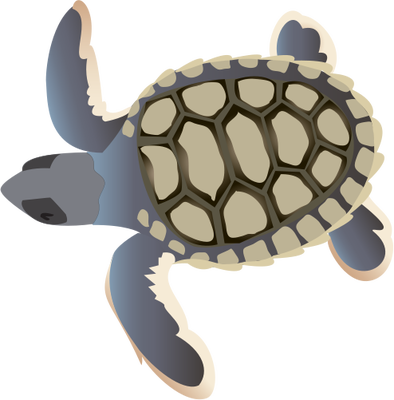 Turtle hatchling clipart clipart Natator depressa (Flatback Sea Turtle) : hatchling ... clipart