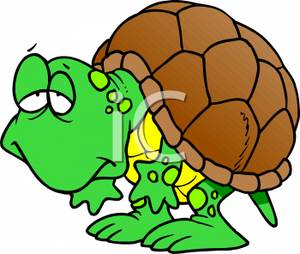 Turtle secretary clipart clipart freeuse library A Sick Turtle - Royalty Free Clipart Picture clipart freeuse library