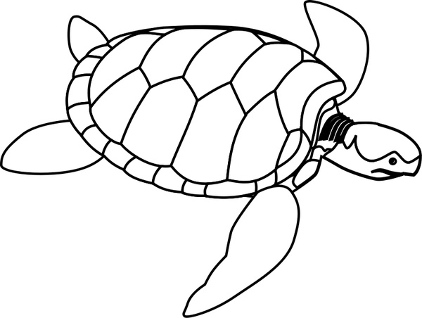 Turtle shell clipart svg clip art download Green sea turtle line art Free vector in Open office drawing svg ... clip art download