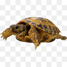 Turtle tanning clipart png royalty free download Old Turtle Png & Free Old Turtle.png Transparent Images ... png royalty free download