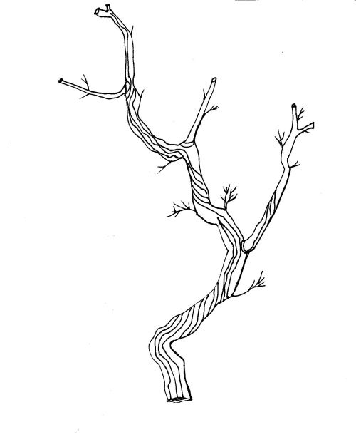 Twig clipart jpg library library Twig Clipart; hand drawn dividers to decorate your blog or ... jpg library library