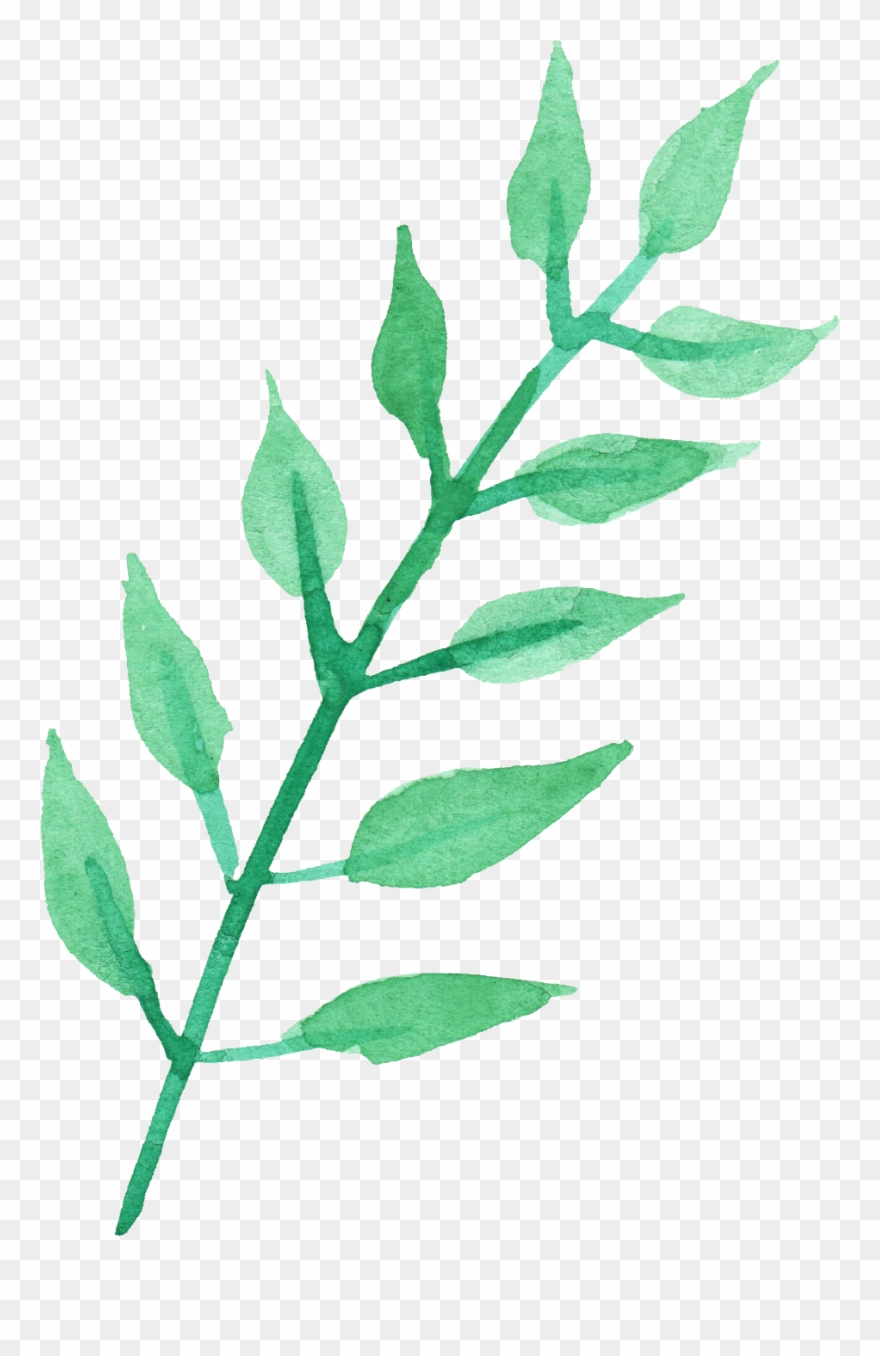 Pile of green leaves clipart without background picture freeuse stock Stem Of A Plant Png Transparent Images - Watercolor Leaves ... picture freeuse stock