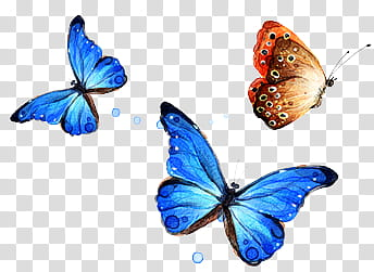 Two butterflies clipart free library Files , two blue and brown butterflies transparent ... free library