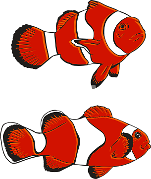 Two fishe clipart freeuse Clownfish two fish clipart clipartfest - WikiClipArt freeuse