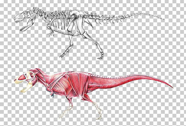 Tyrannosaurus with muscles clipart clipart freeuse stock Tyrannosaurus Brachiosaurus Dinosaur Allosaurus Stegosaurus ... clipart freeuse stock