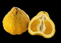Ugli fruit clipart graphic transparent library Download Free png Ugli Fruit (Citrus reticulata - DLPNG.com graphic transparent library