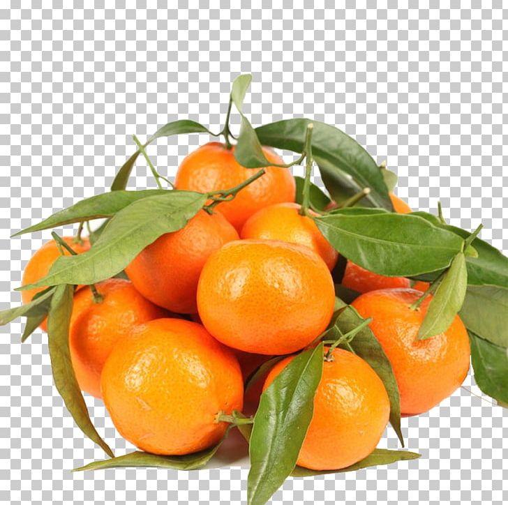 Ugli fruit clipart picture Tangerine Lemon Chenpi Ugli Fruit Orange PNG, Clipart ... picture