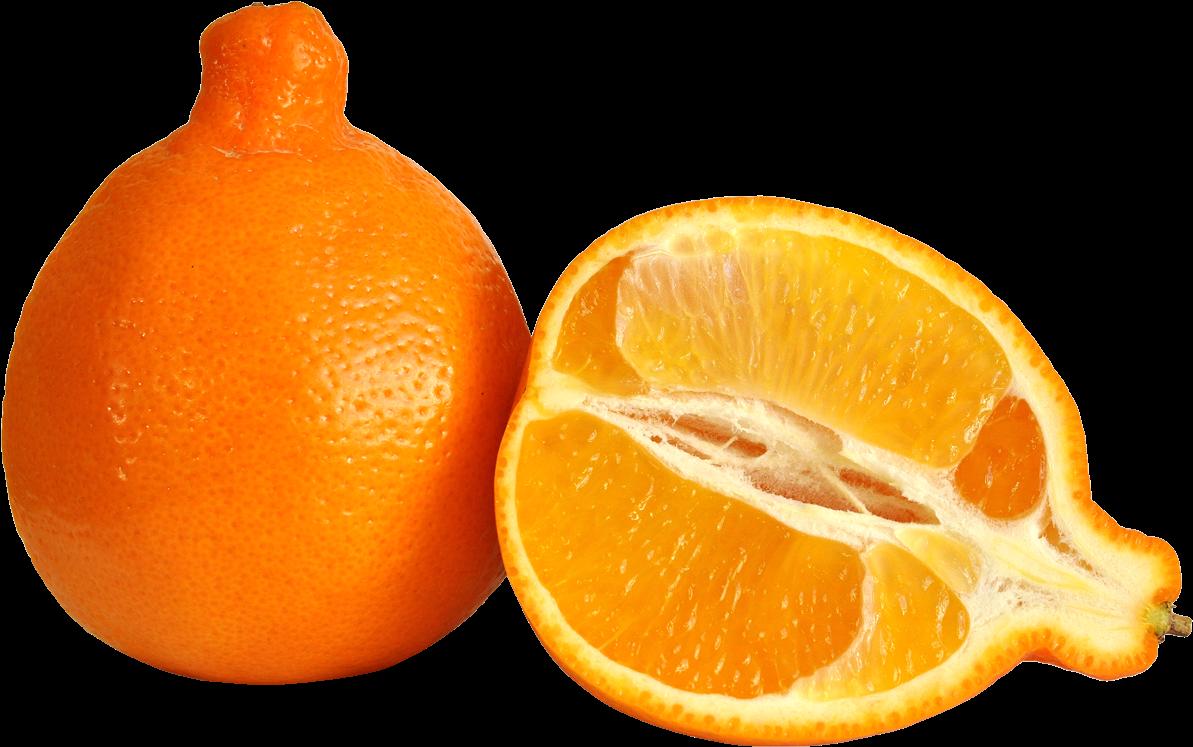 Ugli fruit clipart graphic black and white download Citrus,citrus - Minneola Orange - Download Clipart on ... graphic black and white download