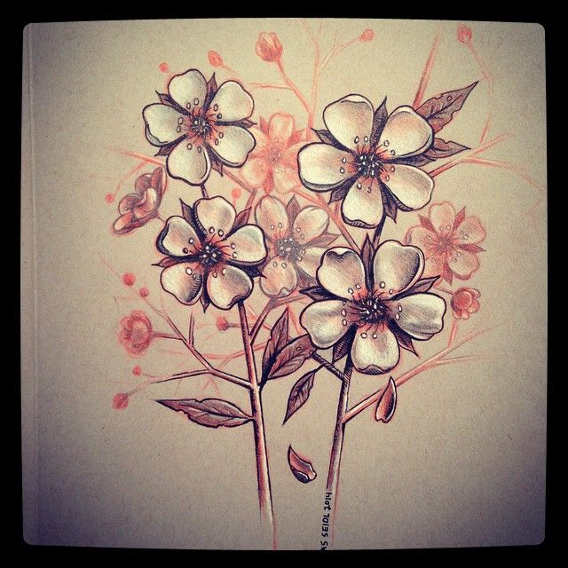 Ume flowers clipart jpg freeuse library Ume Blossom clipart pencil sketch #57 | Art: Brown ... jpg freeuse library