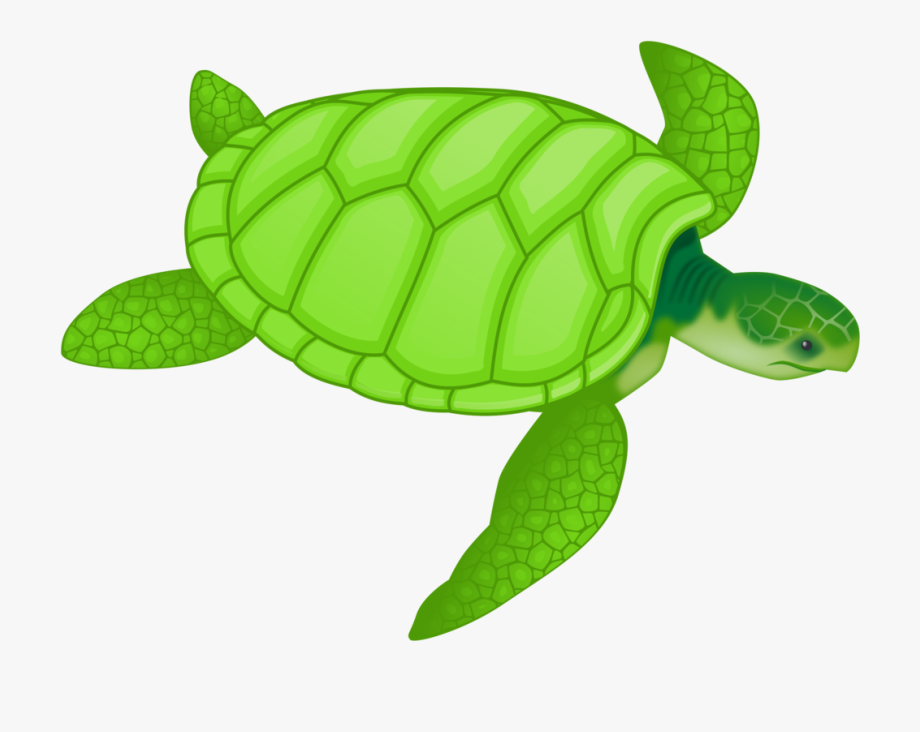 Under the ocean clipart and sea turtle clipart transparent stock Ocean Animal Clipart - Green Sea Turtle Clipart ... clipart transparent stock