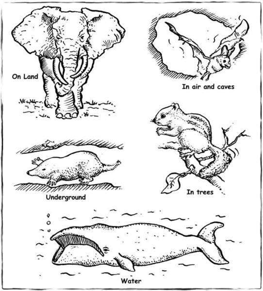 Underground animal home black and white clipart png black and white library Thunderbolt Kids png black and white library