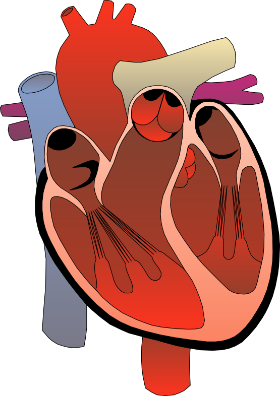 Unhealthy heart clipart vector black and white Cardiac Clipart Group (54+) vector black and white