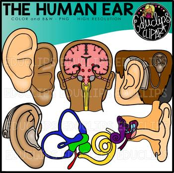 Unimpaired clipart picture freeuse library The Human Ear Clip Art Set {Educlips Clipart} picture freeuse library