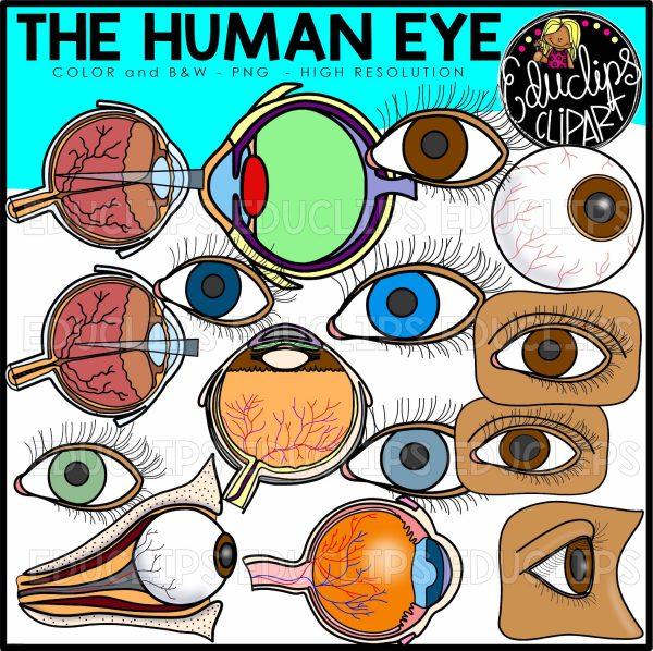 Unimpaired clipart clip art transparent The Human Ear & Eye Clip Art Bundle clip art transparent