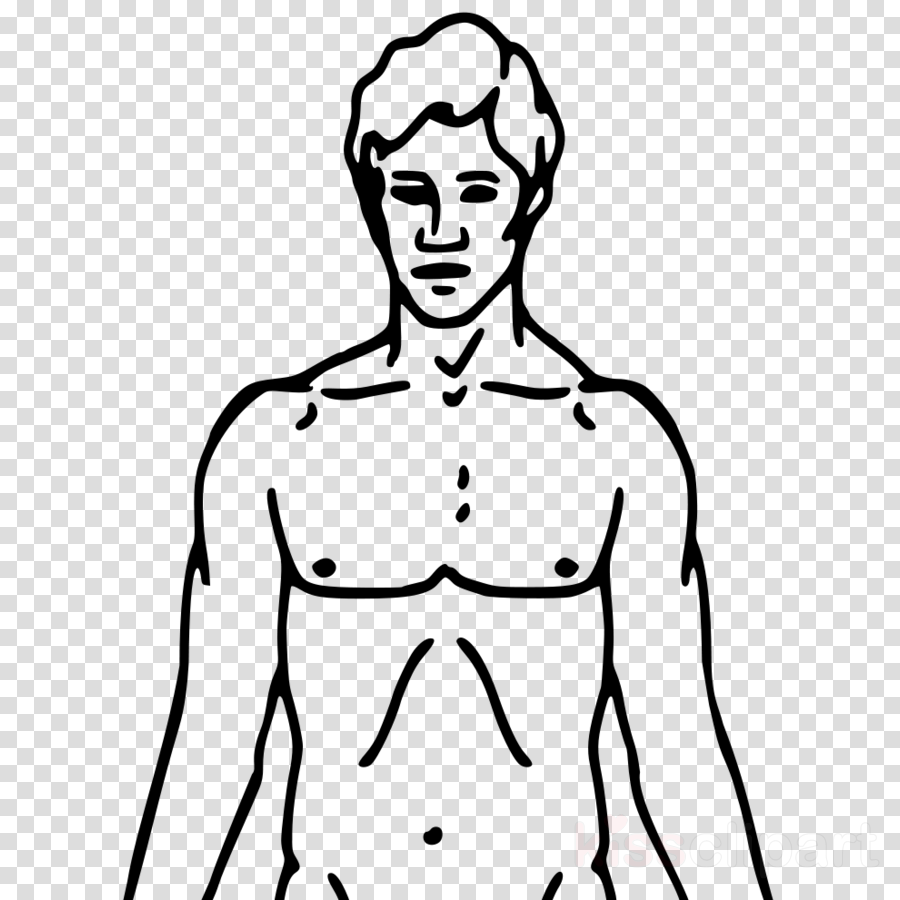 Upper body clipart svg royalty free transparent png image & clipart free download svg royalty free