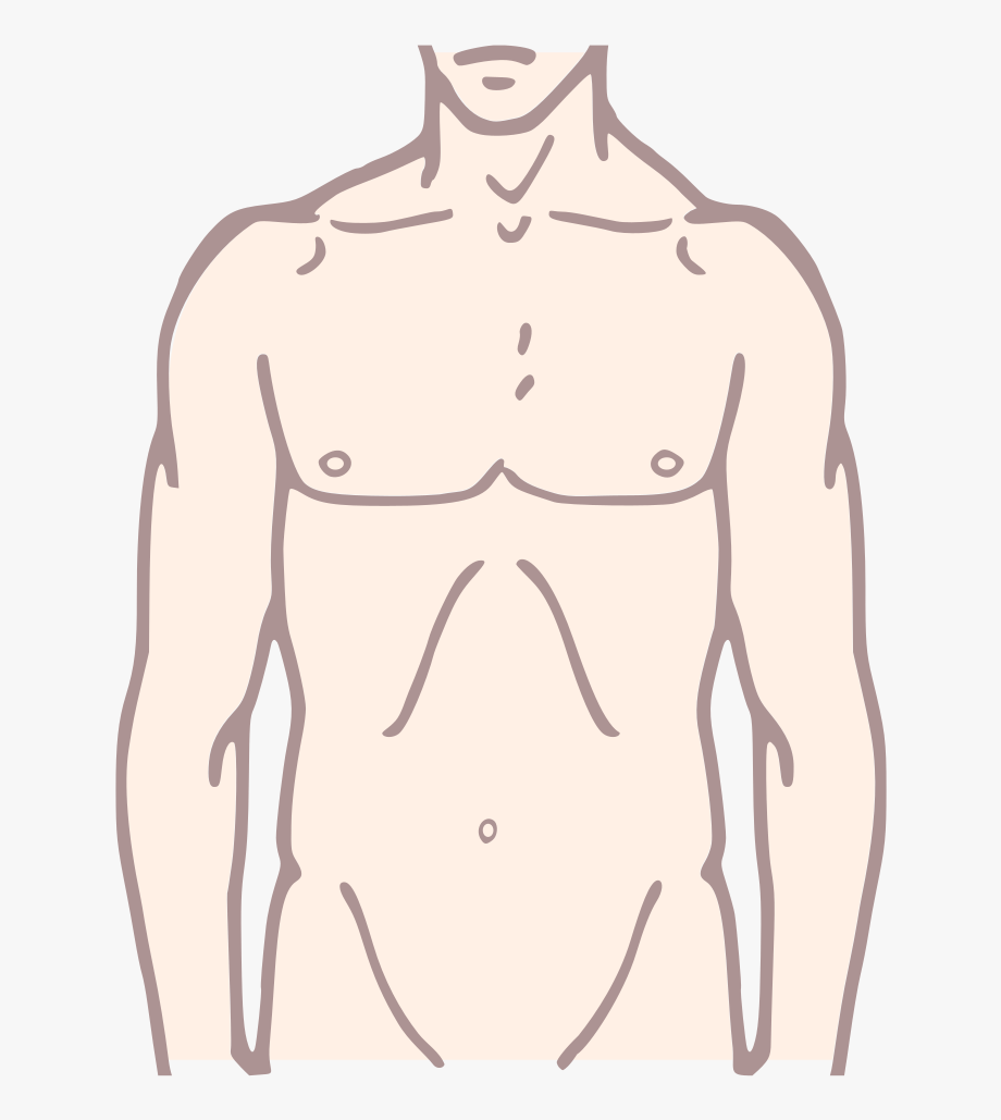Upper body clipart vector freeuse stock Pioneer Plaque Man Upper Body As Diagram Template Colour ... vector freeuse stock